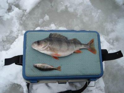 рыболовные сайты костромы